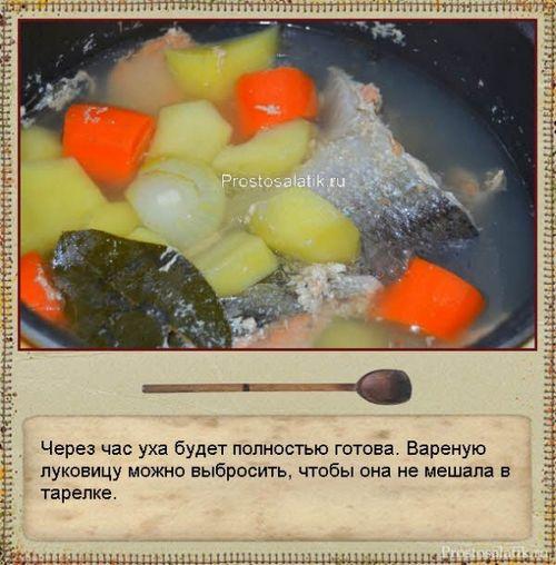 Рецепты ухи в домашних условиях из красной рыбы
